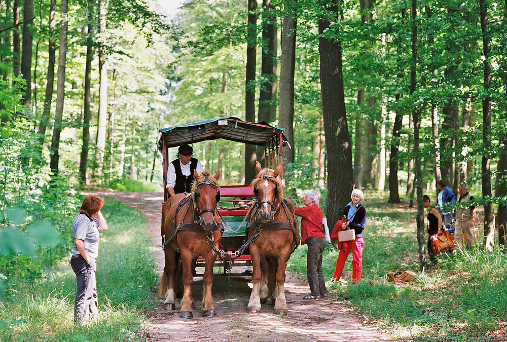 Tour with horse and wagon
